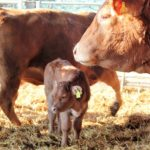 *Expedition Biofleisch - mein Tag auf dem Biolandhof Frohnenbruch